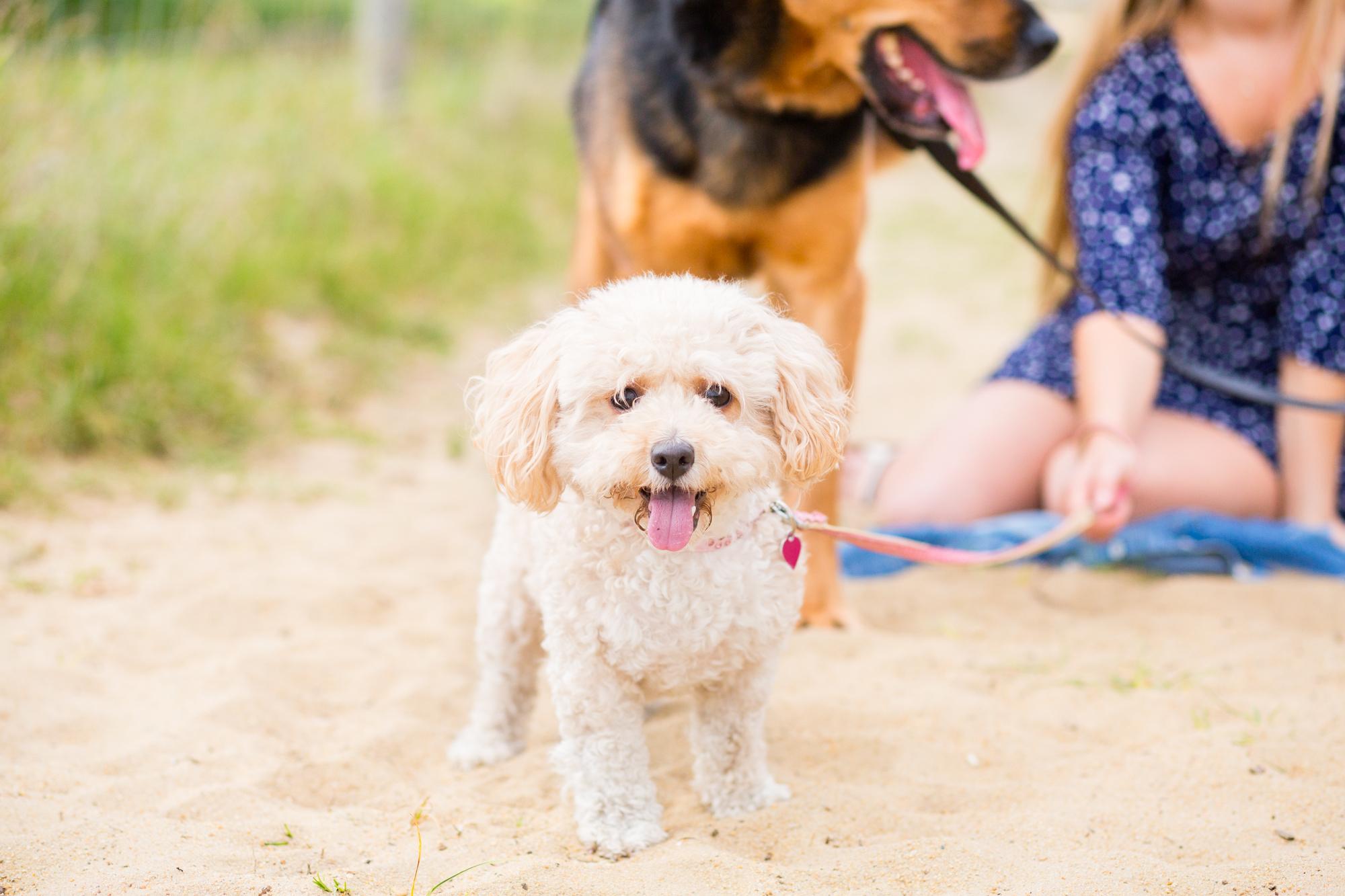 puppy photographer surrey