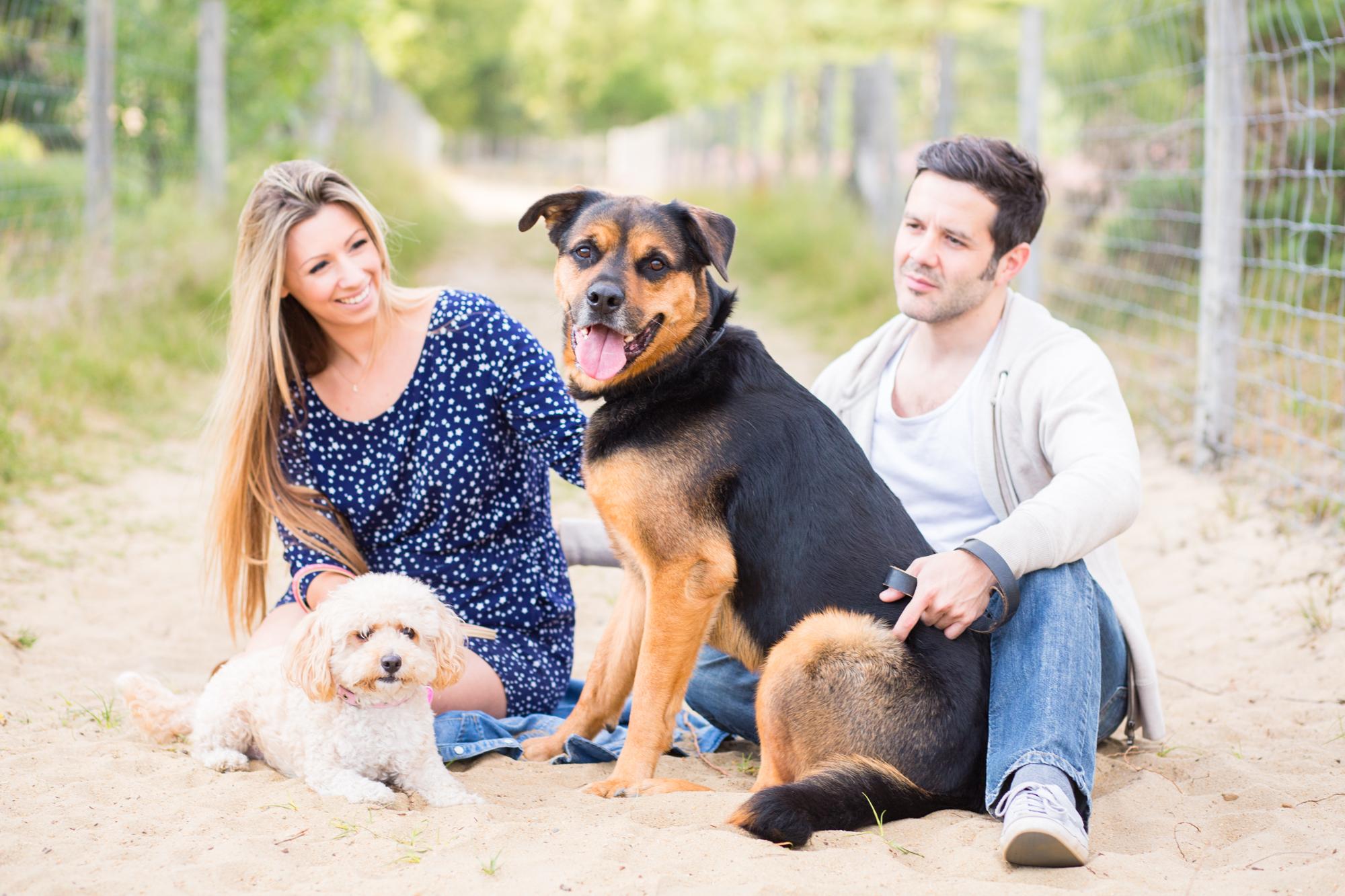 natural dog portraits surrey