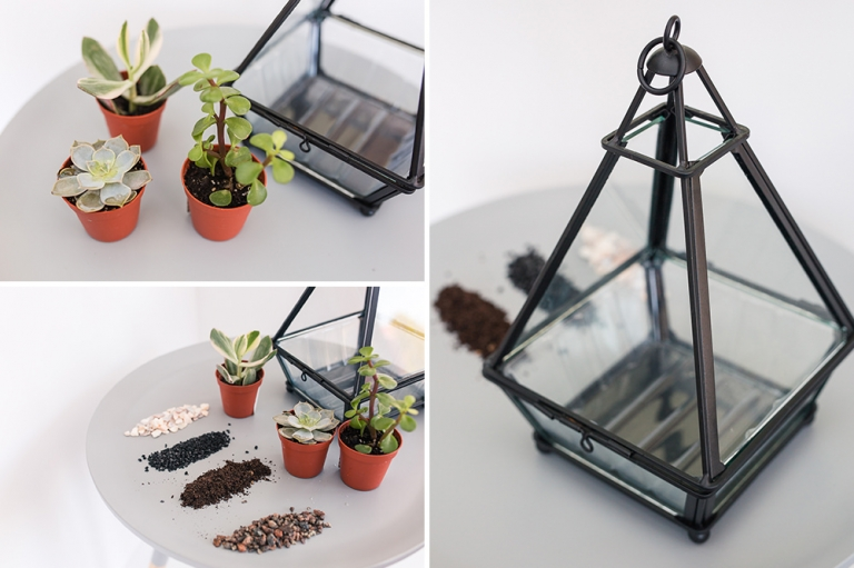 Succulents in terrarium DIY project