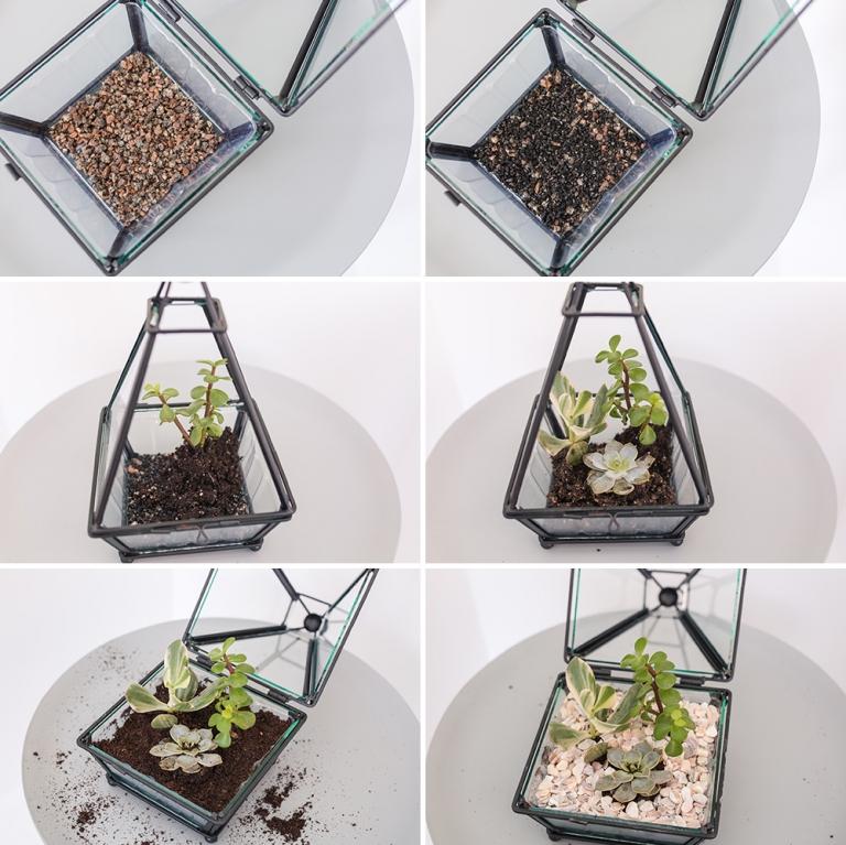 Ingredients for succulent terrarium DIY project